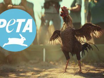 PETA cover